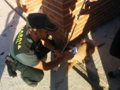 La Guardia Civil detiene a una persona por el maltrato de 58 perros