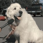 Un perro es elegido alcalde en un pueblo de Estados Unidos