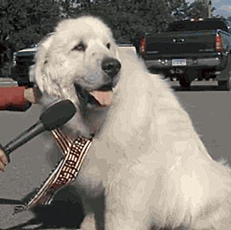 Un perro, elegido alcalde en un pueblo de Estados Unidos