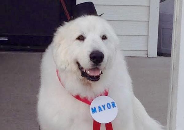 Un perro, elegido alcalde en un pueblo de EE.UU.