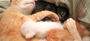 """Programa """"Captura, Esteriliza y Suelta"""" (CES) para gatos callejeros en Valdetorres de Jarama"""