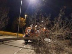 Los fuertes vientos provocan la caída de un árbol en El Casar