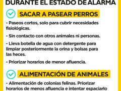 La FAPAM denuncia que el Ayuntamiento de Madrid está dejando morir de hambre a las colonias felinas y otros animales