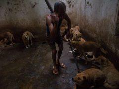 La editora de La Plaza envía una carta al Presidente de la República Popular China por el coronavirus y el horrible trato a los animales