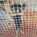 La Fiscalía de Madrid pide 18 meses de cárcel para el centro canino Maikán y para el veterinario de VetMóvil y Recolte por exterminio masivo de perros y gatos