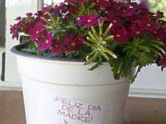 El Ayuntamiento de Valdepiélagos regala una planta a cada una de las madres del municipio en el Día de la Madre