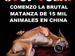 I CONCENTRACIÓN PROTESTA FRENTE EMBAJADA CHINA DE MADRID CONTRA EL FESTIVAL DE YULIN