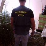 """La Guardia Civil desmantela una plantación de marihuana """"indoor"""" en El Casar"""