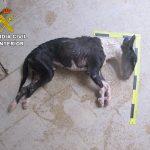 Un perro con propietario muere de hambre en Brihuega (Guadalajara)