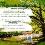 El Ayuntamiento de Talamanca de Jarama organiza una visita al Hayedo de Montejo