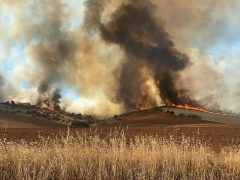 Los incendios de Valdepiélagos y El Casar han arrasado 800 hectáreas y han quemado dos viviendas