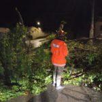 Muchos árboles caídos en El Casar por la borrasca Bárbara y Protección Civil, sin parar