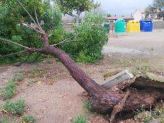 Los fuertes vientos derriban una línea telefónica en Uceda, además de árboles y ramas