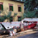 Talamanca de Jarama sufre muchas caídas de árboles por los fuertes vientos y una marquesina queda destrozada por uno de ellos
