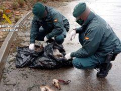 El SEPRONA descubre un cementerio ilegal de perros en El Casar en el alcantarillado de una urbanización
