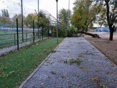 Fuente el Saz también sufre caída de árboles por la borrasca Bárbara