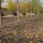 La Comunidad de Madrid propone talar 7 hectáreas de árboles del Puente Romano de Talamanca de Jarama