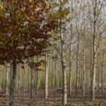 La Comunidad de Madrid talará 8 hectáreas de arbolado de La Chopera de Talamanca de Jarama