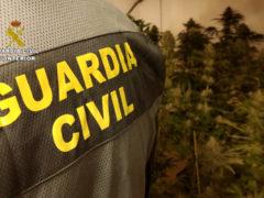 La Guardia Civil desmantela dos plantaciones de marihuana en El Casar y Galápagos