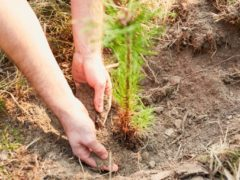 Talamanca de Jarama se beneficia del acondicionamiento de zonas verdes y forestales de la Comunidad de Madrid