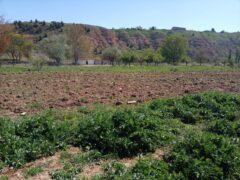 El Ayuntamiento de Uceda pone a disposición de los vecinos un huerto urbano ecológico