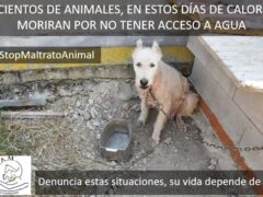 La FAPAM hace un llamamiento urgente para evitar la muerte de animales ante esta ola de calor